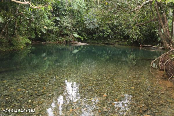 Daintree swimming hole [australia_daintree_305]
