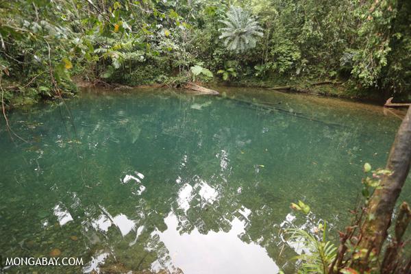 Daintree swimming hole [australia_daintree_308]