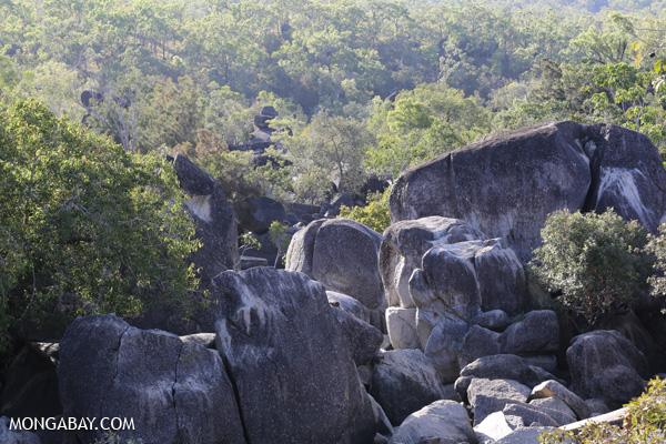 Mareeba Rock Wallaby [australia_fnq_0462]