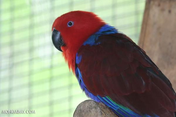 Bird [australia_fnq_0803]