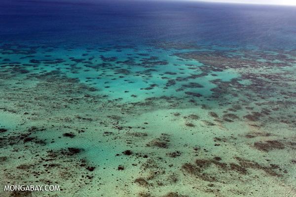 Great Barrier Reef coral [australia_great_barrier_reef_0024]