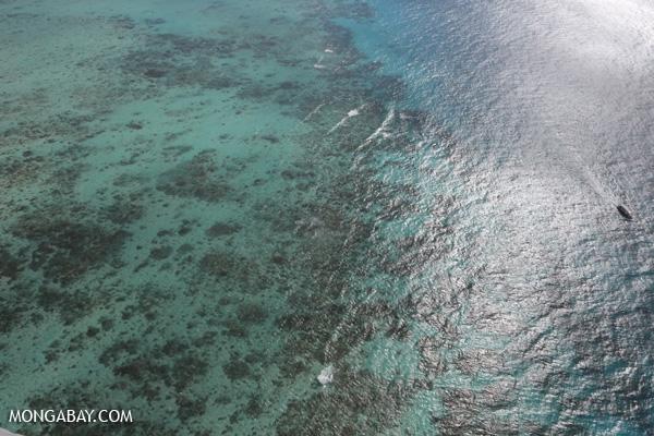 Great Barrier Reef coral [australia_great_barrier_reef_0031]