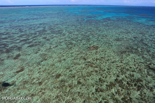 Hastings Reef on the Great Barrier Reef [australia_great_barrier_reef_0162]