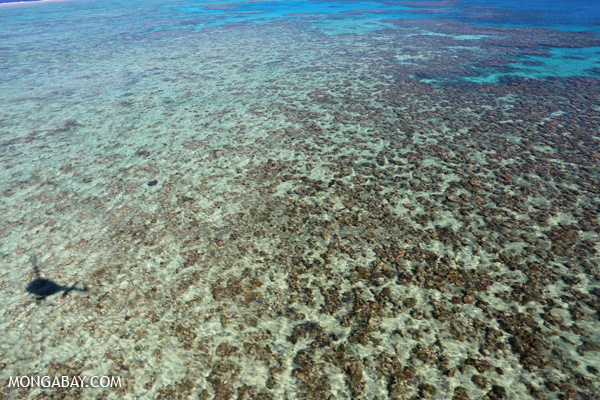 Hastings Reef on Australia's Great Barrier Reef [australia_great_barrier_reef_0171]