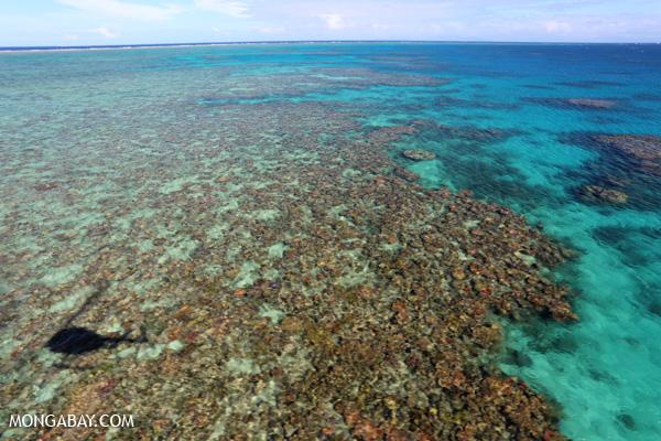 Hastings Reef on Australia's Great Barrier Reef [australia_great_barrier_reef_0175]