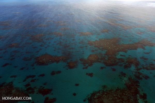Hastings Reef on Australia's Great Barrier Reef [australia_great_barrier_reef_0247]