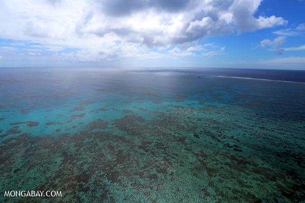 Hastings Reef on the Great Barrier Reef