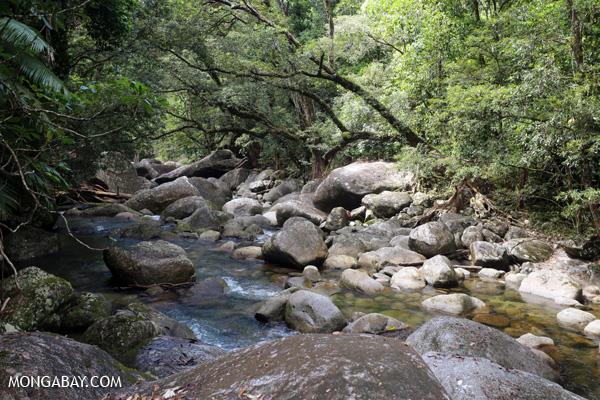 Rex creek in Mossman Gorge [australia_mossman_gorge_027]