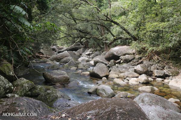 Rex creek in Mossman Gorge [australia_mossman_gorge_029]
