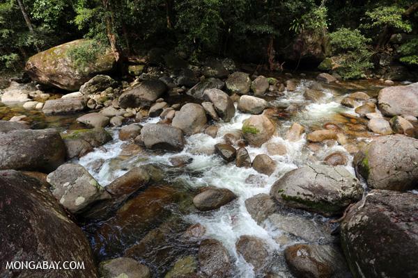 Rex creek in Mossman Gorge [australia_mossman_gorge_040]
