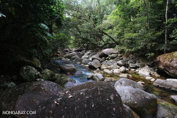 Rex creek in Mossman Gorge [australia_mossman_gorge_042]