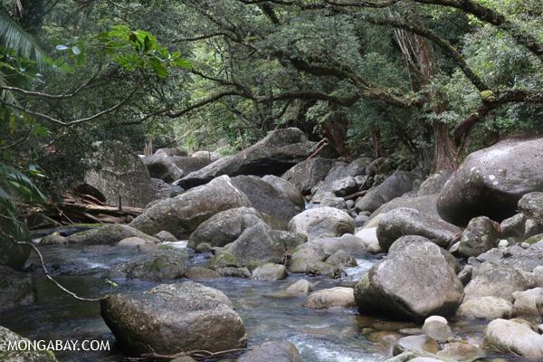 Rex creek in Mossman Gorge [australia_mossman_gorge_046]