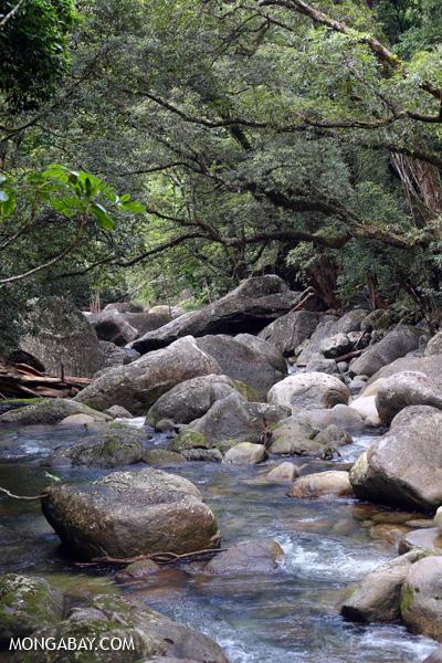 Rex creek in Mossman Gorge [australia_mossman_gorge_049]