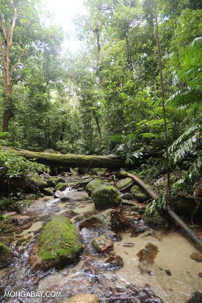 Wurumbu creek [australia_mossman_gorge_103]