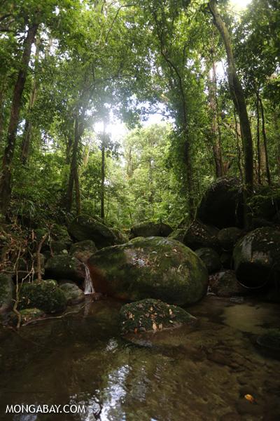 Wurumbu creek [australia_mossman_gorge_105]