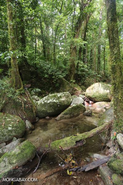 Wurumbu creek [australia_mossman_gorge_121]