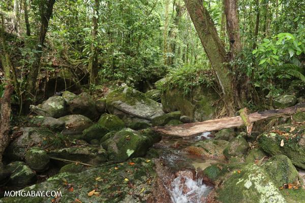 Wurumbu creek [australia_mossman_gorge_125]