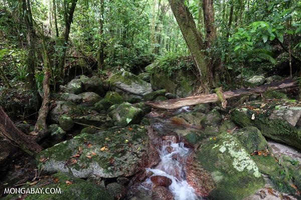 Wurumbu creek [australia_mossman_gorge_128]