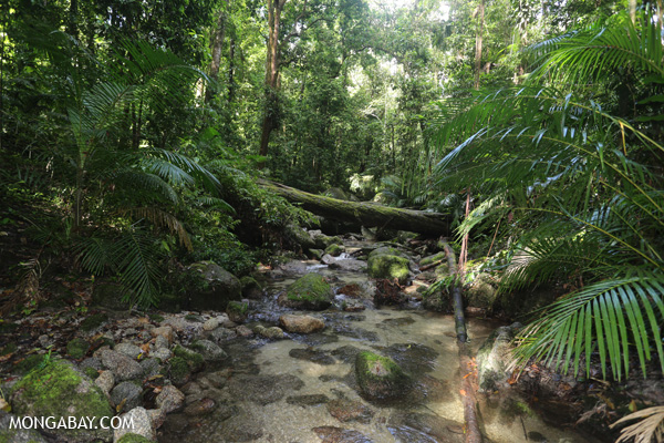 Wurumbu creek [australia_mossman_gorge_163]