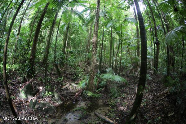 Rainforest creek [australia_mossman_gorge_193]