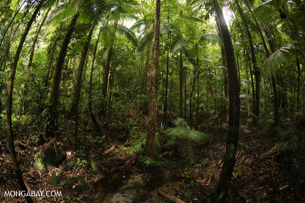 Rainforest on mainland Australia. Photo by: Rhett A. Butler.