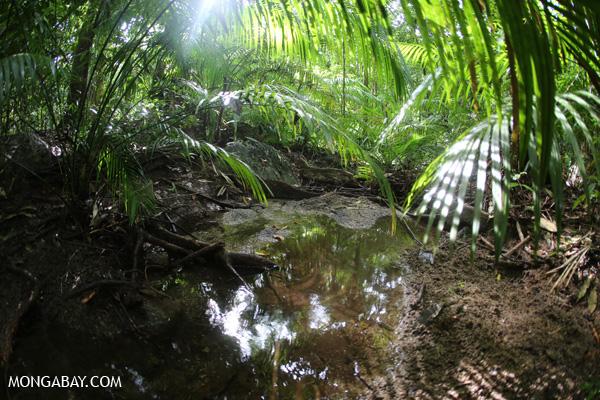 Rainforest creek [australia_mossman_gorge_200]