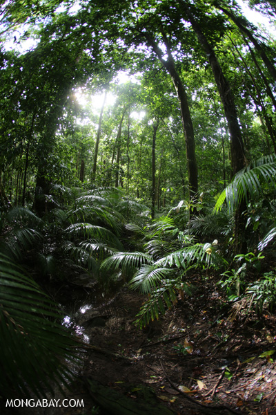 Rainforest creek [australia_mossman_gorge_207]