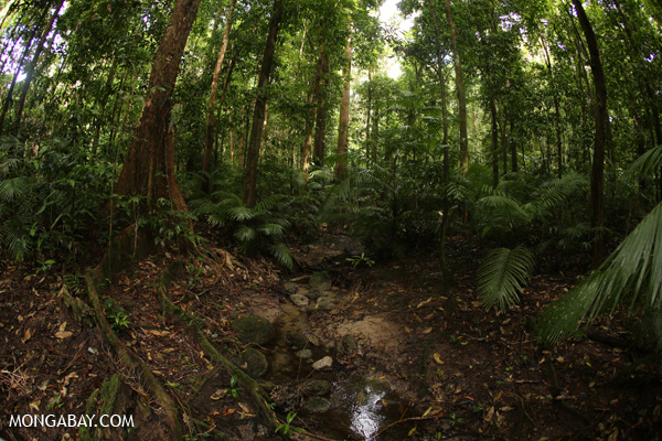 Mossman rainforest [australia_mossman_gorge_210]