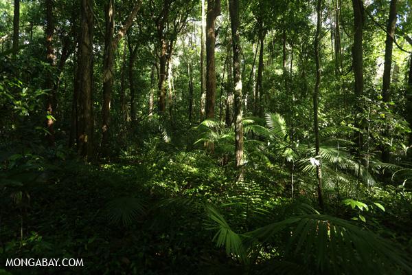 Daintree rainforest in Mossman Gorge