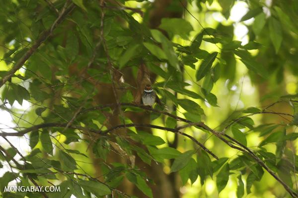 Bird [australia_mossman_gorge_327]