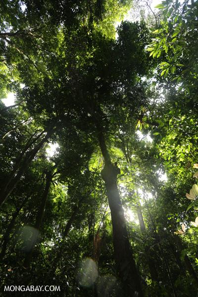 Mossman rainforest [australia_mossman_gorge_332]
