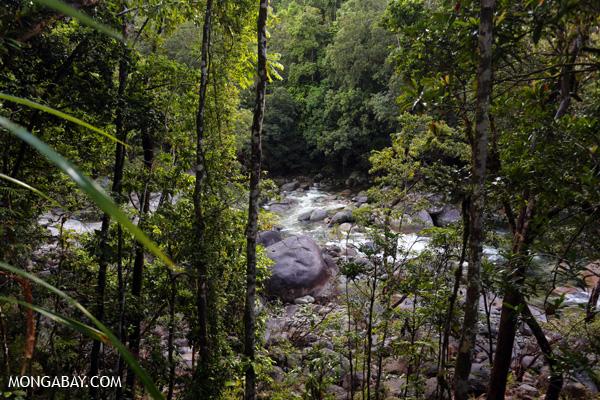 Mossman river [australia_mossman_gorge_351]