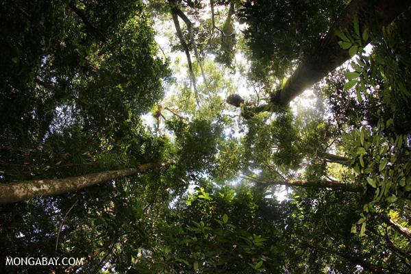 Mossman rain forest [australia_mossman_gorge_363]