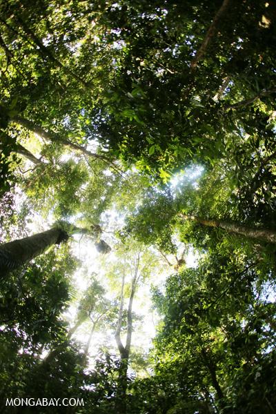Mossman rain forest [australia_mossman_gorge_365]