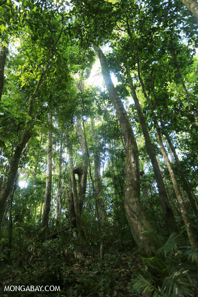 Mossman rain forest [australia_mossman_gorge_368]