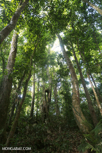 Mossman rain forest [australia_mossman_gorge_370]