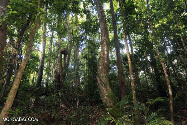 Mossman rain forest [australia_mossman_gorge_372]