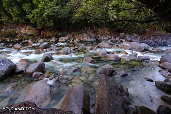 Mossman creek [australia_mossman_gorge_398]