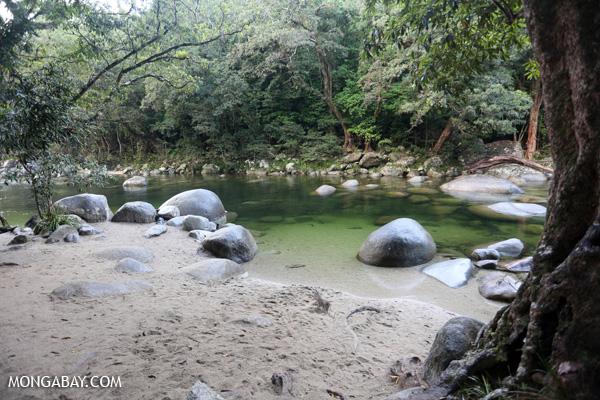 Mossman river [australia_mossman_gorge_419]