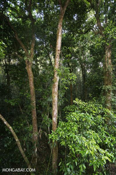 Daintree rainforest [australia_mossman_gorge_423]