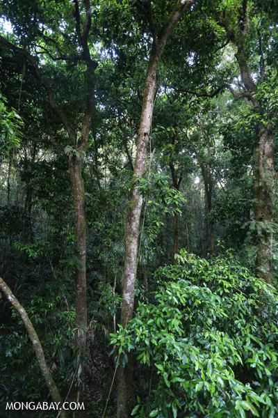 Daintree rainforest [australia_mossman_gorge_424]