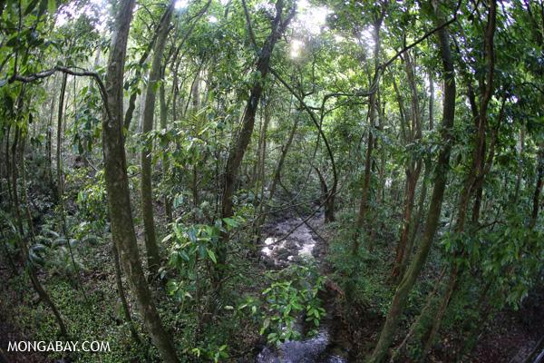 Creek in the Daintree rain forest [australia_mossman_gorge_433]