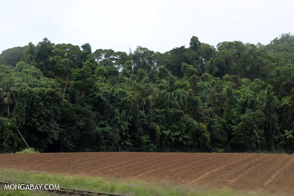 Forest clearing for sugar cane