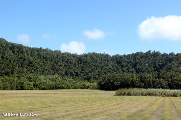 Sugar cane and rainforest in Queensland [australia_road_to_daintree_193]