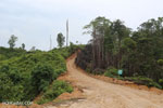 Illegal road leading to an oil palm plantation