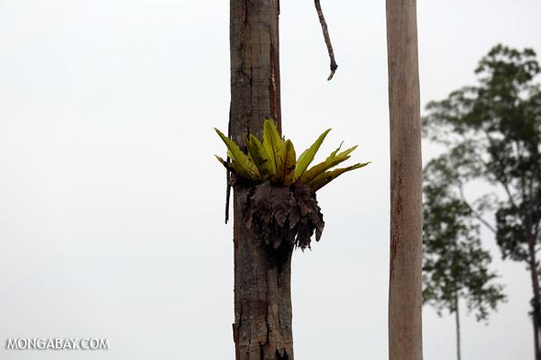 Epiphyte on a tree
