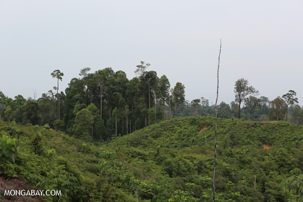 Patch of forest in a sea of deforestation