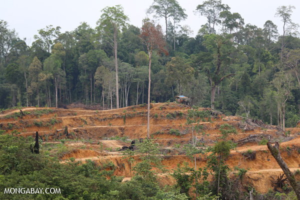 Deforestation for palm oil within the protected Gunung Leuser ecosystem in Aceh.