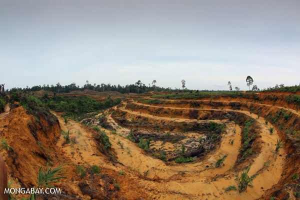 A newly planted oil palm plantation in Indonesia's Aceh province. Photo: Rhett A. Butler