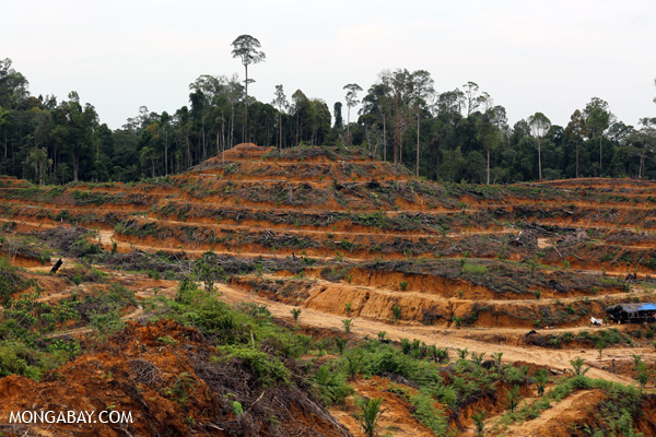 New forest clearing for an oil palm plantation in Sumatra.